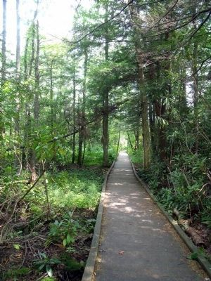 Cranberry Glades Boardwalk image. Click for full size.