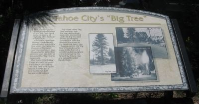 "Tahoe City's ""Big Tree"" Marker image. Click for full size."