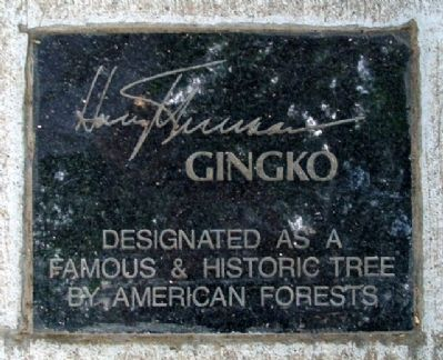 Gingko Tree Marker image. Click for full size.