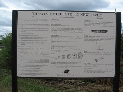 The Oyster Industry in New Haven Marker image. Click for full size.