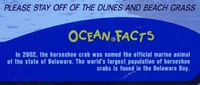 City of Rehoboth Beach Ocean Facts image. Click for full size.
