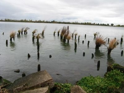 Pier Piling Ruins in the San Joaquin River at Smith's Landing image. Click for full size.
