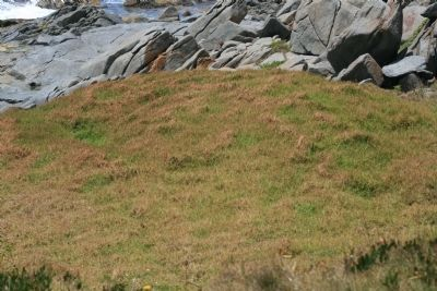 McWilliam Park whale burial site image. Click for full size.