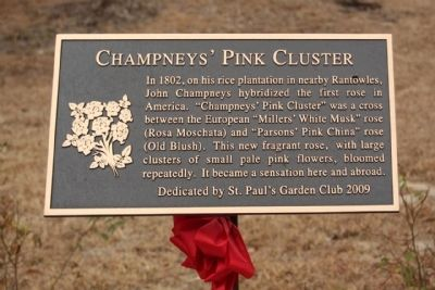 Champneys' Pink Cluster Marker image. Click for full size.