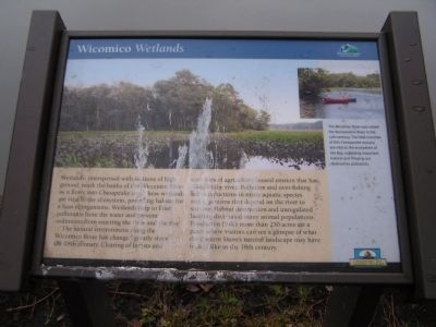 Wicomico Wetlands Marker image. Click for full size.