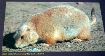 Prairie Dog Photo on Home on the Range Marker image. Click for full size.