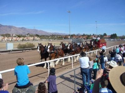 Budweiser Clydesdales go on parade at Rillito Race Track image. Click for full size.
