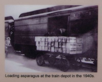 Loading Asparagus at the Train Depot in the 1940s image. Click for full size.