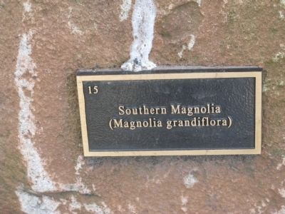 Plaque Marking the Southern Magnolia image. Click for full size.