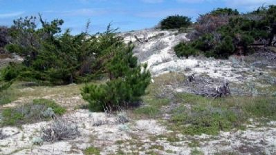 Dunes at Asilomar image. Click for full size.