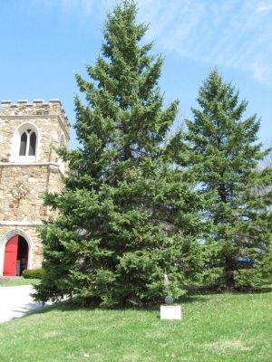 Tree Planted in Memory of Private Charles J. O'Connell image. Click for full size.
