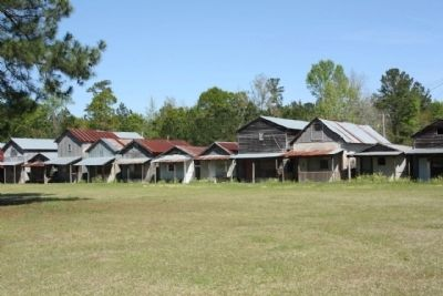 Shady Grove Camp Ground west side cabins image. Click for full size.