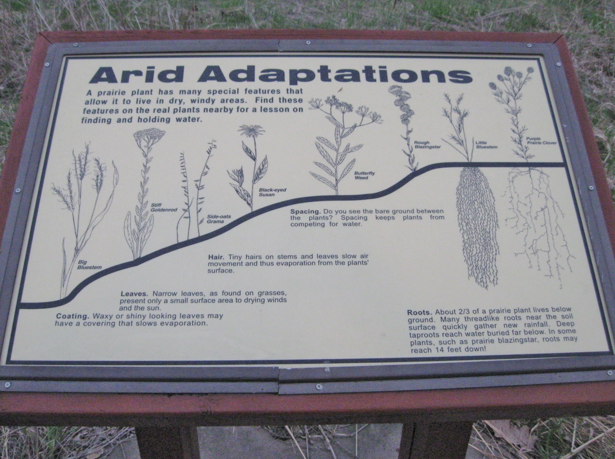 Arid Adaptations