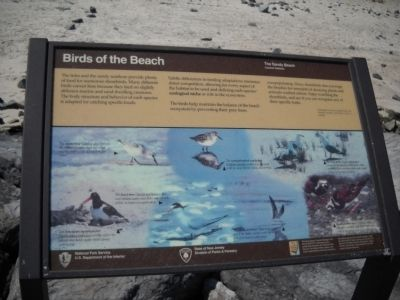 Birds of the Beach Marker image. Click for full size.