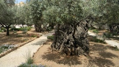 Garden of Olives image. Click for full size.