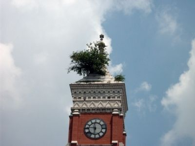 Tree Growing Out of Courthouse Roof . . ! image. Click for full size.