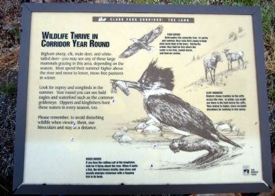Wildlife Thrive In Corridor Year Round Marker image. Click for full size.