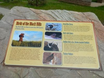 Bird of the Black Hills Marker image. Click for full size.