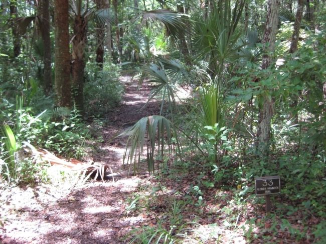 The Florida Hammock Trail at the Dunlawton Sugar Mill Botanical Gardens image. Click for full size.