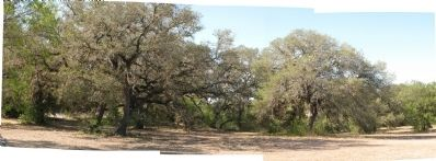 Stand of oaks across the street from marker image. Click for full size.
