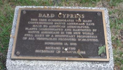Bald Cypress Marker image. Click for full size.