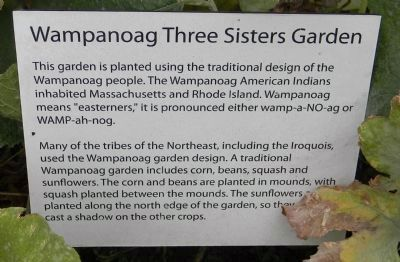 Wampanoag Three Sisters Garden image. Click for full size.