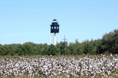 Cape Charles Light, rises above the cotton fields, typical of this area image. Click for full size.