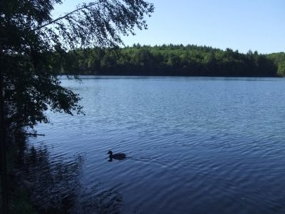 Walden Pond in Summer image. Click for full size.