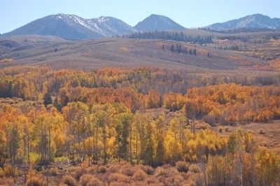 Fall Colors near Conway Summit image. Click for full size.