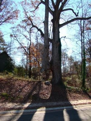 Cherokee Indian Trail Tree Marker image. Click for full size.