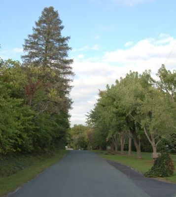 Avenue of Trees image. Click for full size.