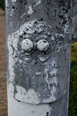 Ann Amelia Tombstone image. Click for full size.