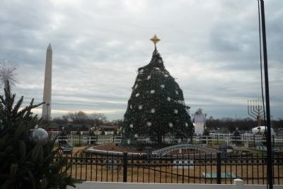 The new National Christmas Tree - a 26-foot Colorado blue spruce planted 2011 image. Click for full size.