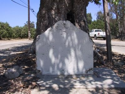 Sycamore Tree Marker image. Click for full size.