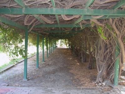 The Grape Arbor image. Click for full size.