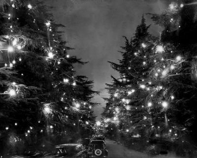 Christmas Tree Lane image. Click for full size.