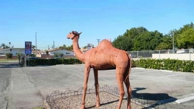"The Drum Barracks Camel, commemorating the U.S. Army's experimental ""camel corps"" image. Click for full size."