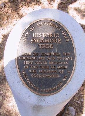 Historic Sycamore Tree Marker image. Click for full size.
