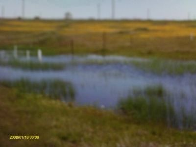 Mather Vernal Pool - Wet Phase image. Click for full size.