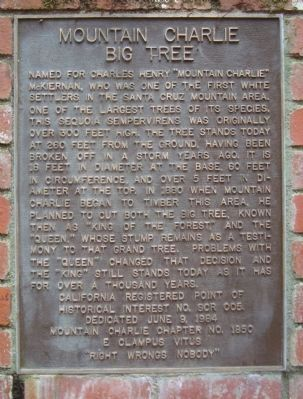 Mountain Charlie Big Tree Marker image. Click for full size.