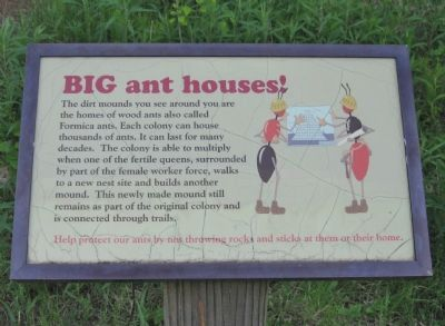 BIG ant houses! image. Click for full size.