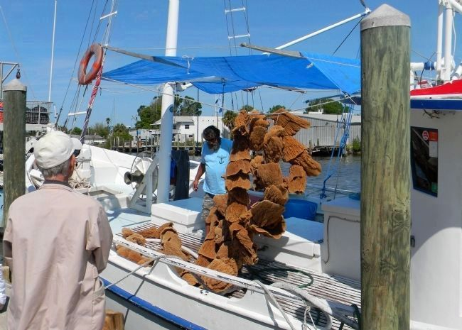The Tarpon Springs Sponge Fisherman image. Click for full size.