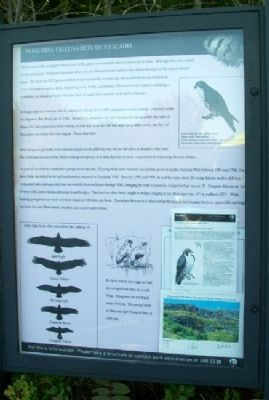 Peregrine Falcons Return to Acadia Marker image. Click for full size.