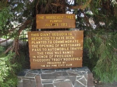 The Roosevelt Tree Marker image. Click for full size.
