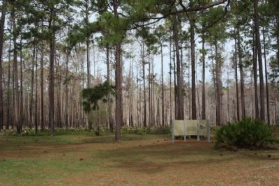 Olustee Battlefield Marker, amid the pine forest as mentioned image. Click for full size.
