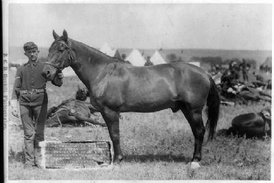 The great silent witness - 7th Cavalry Survivor, Co. I , the horse named, Comanche. image. Click for full size.