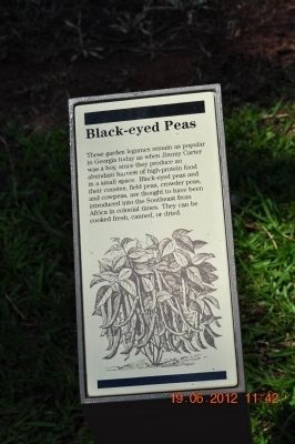 Black-eyed Peas image. Click for full size.