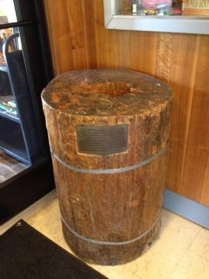 Trunk of Washington's Survey tree in Glencarlyn Library image. Click for full size.
