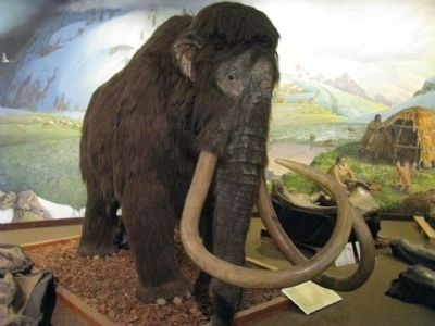 Woolly Mammoth (Mammuthus primigenius) image. Click for full size.