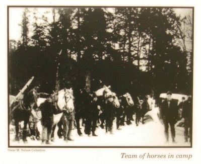 Right hand photo: Team of horses in camp image. Click for full size.